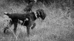 Watson II vom Jagdkonig (Doc) (DD)